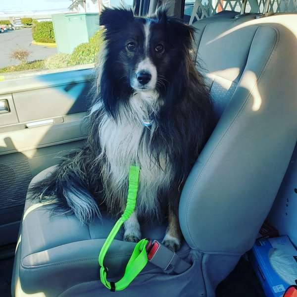 Pet - Car Safety Belt